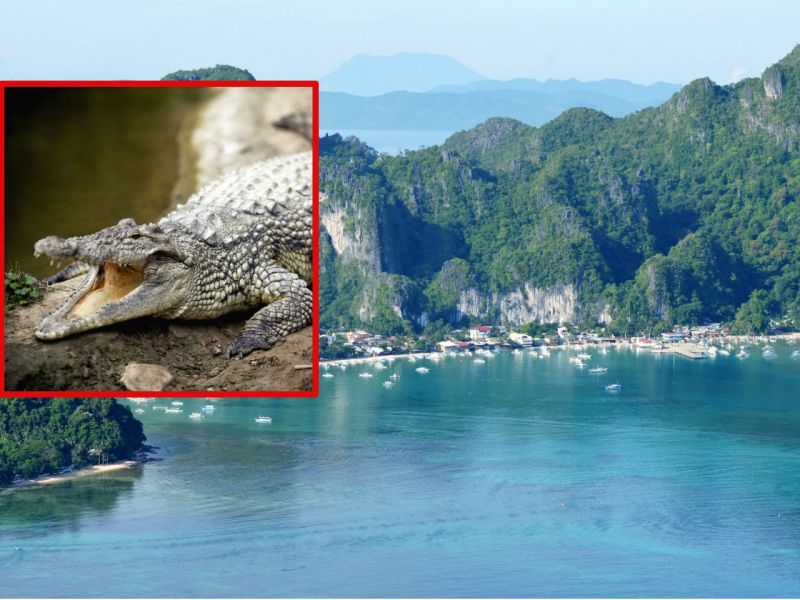 A Filipino student was bitten by a crocodile while he was swimming in a river in Palawan in the Philippines. Photos: Wikimedia Commons, iStock