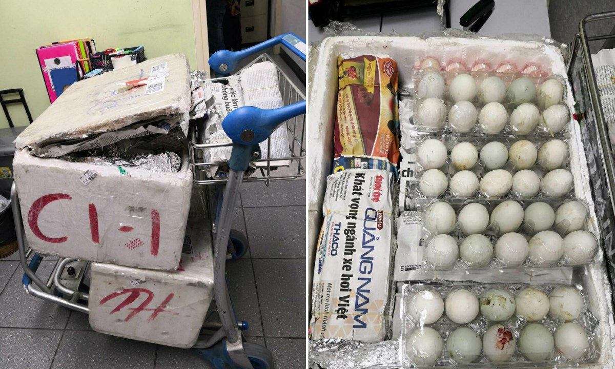 The two boxes containing the 490 illegally imported duck eggs. Photo: Facebook/AVA