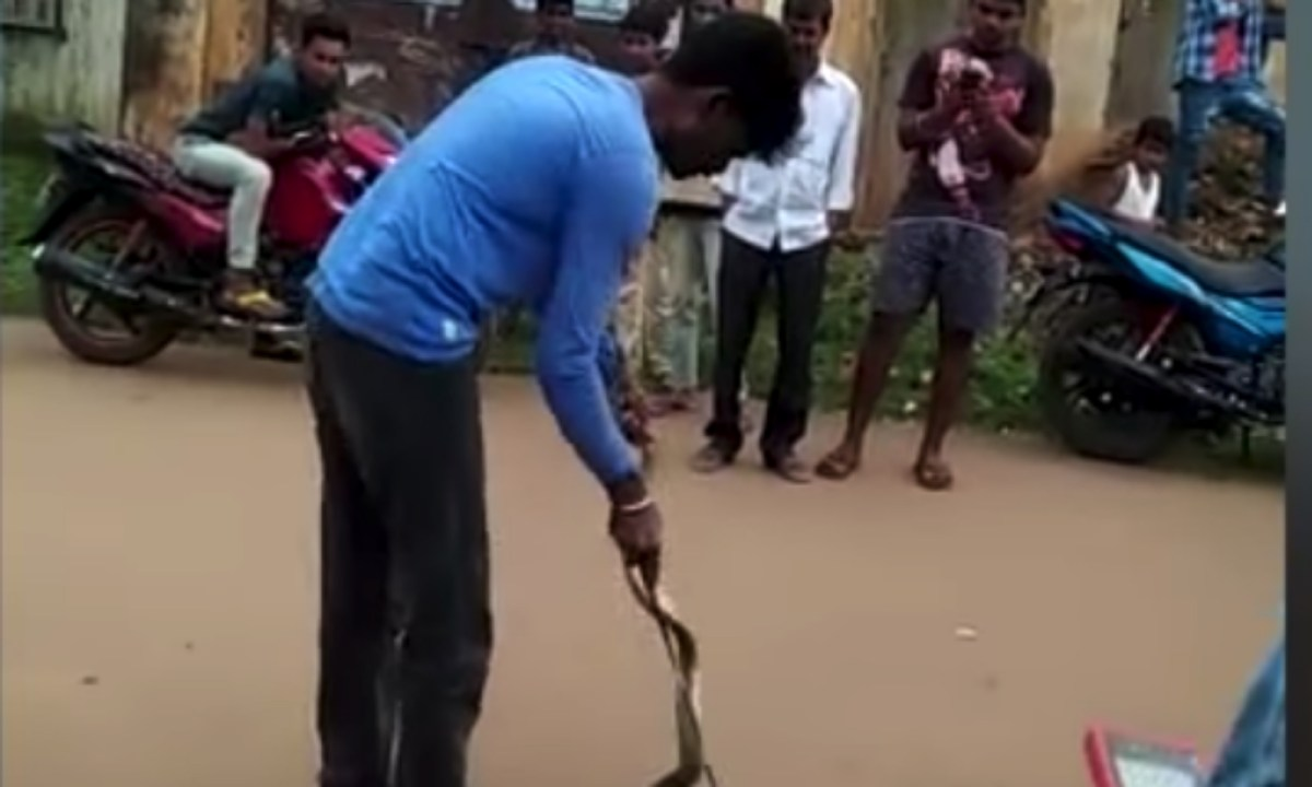 The amateur snake catcher tried to subdue the snake but failed. Captured on Youtube.