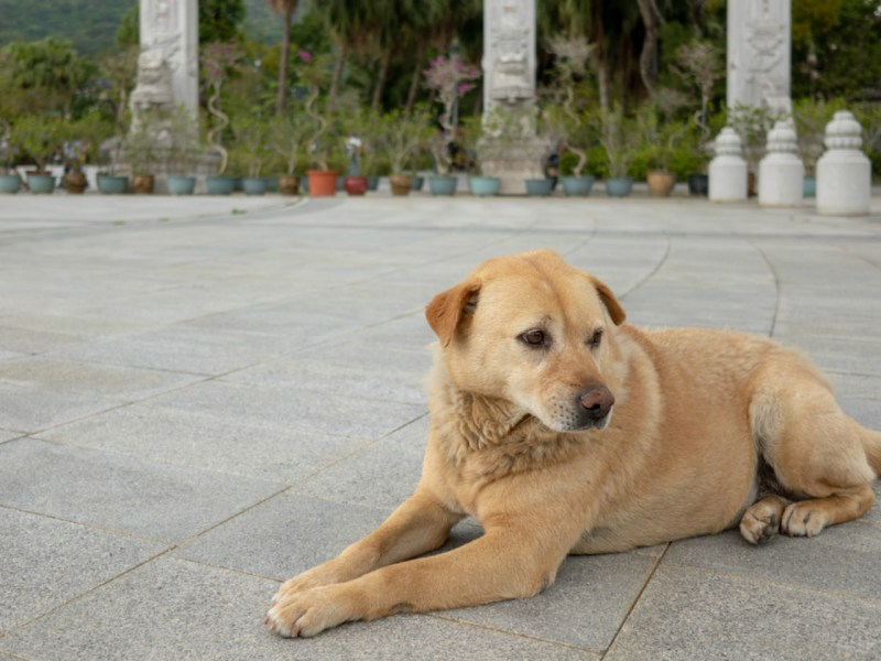 Dogs have been eaten in some parts of Asia for centuries, but pressure is mounting to stop the trade. Photo: iStock