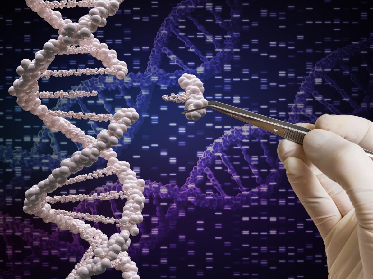 Genetic manipulation. Photo: iStock