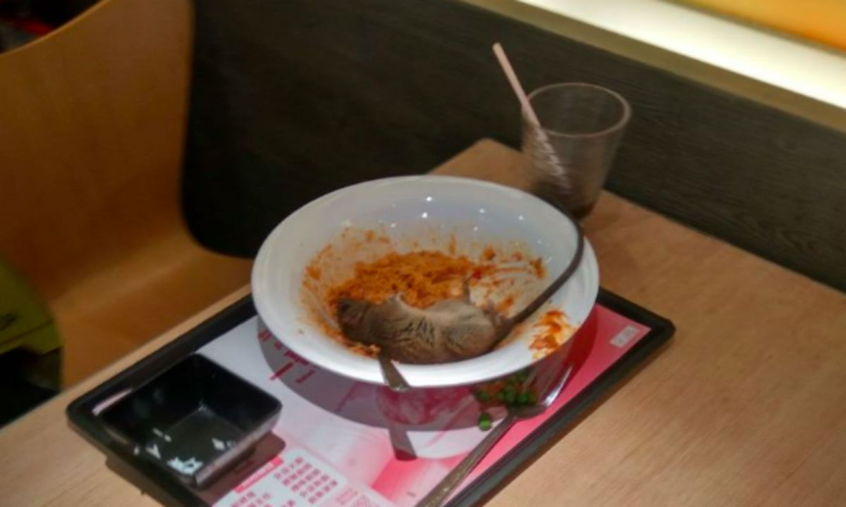 The rat lying in the food bowl at Café de Coral in Lok Wah Center, Kowloon.  Photo: Facebook