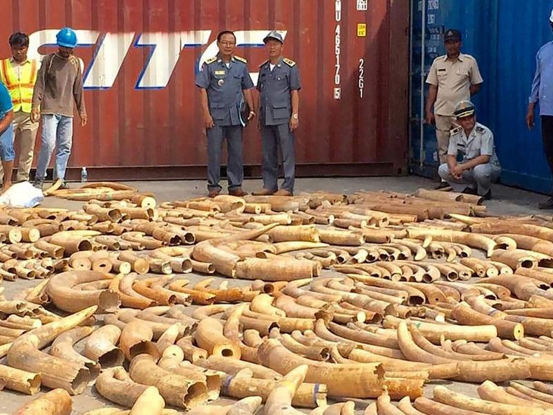 Cambodian Customs and Excise officials look at the more than 3.2 tonnes of elephant tusks seized from a shipping container at the Phnom Penh port. Photo: AFP