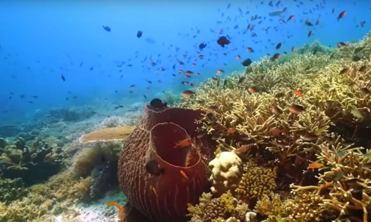Tubbataha Reef off the Philippine island of Palawan. Photo: YouTube