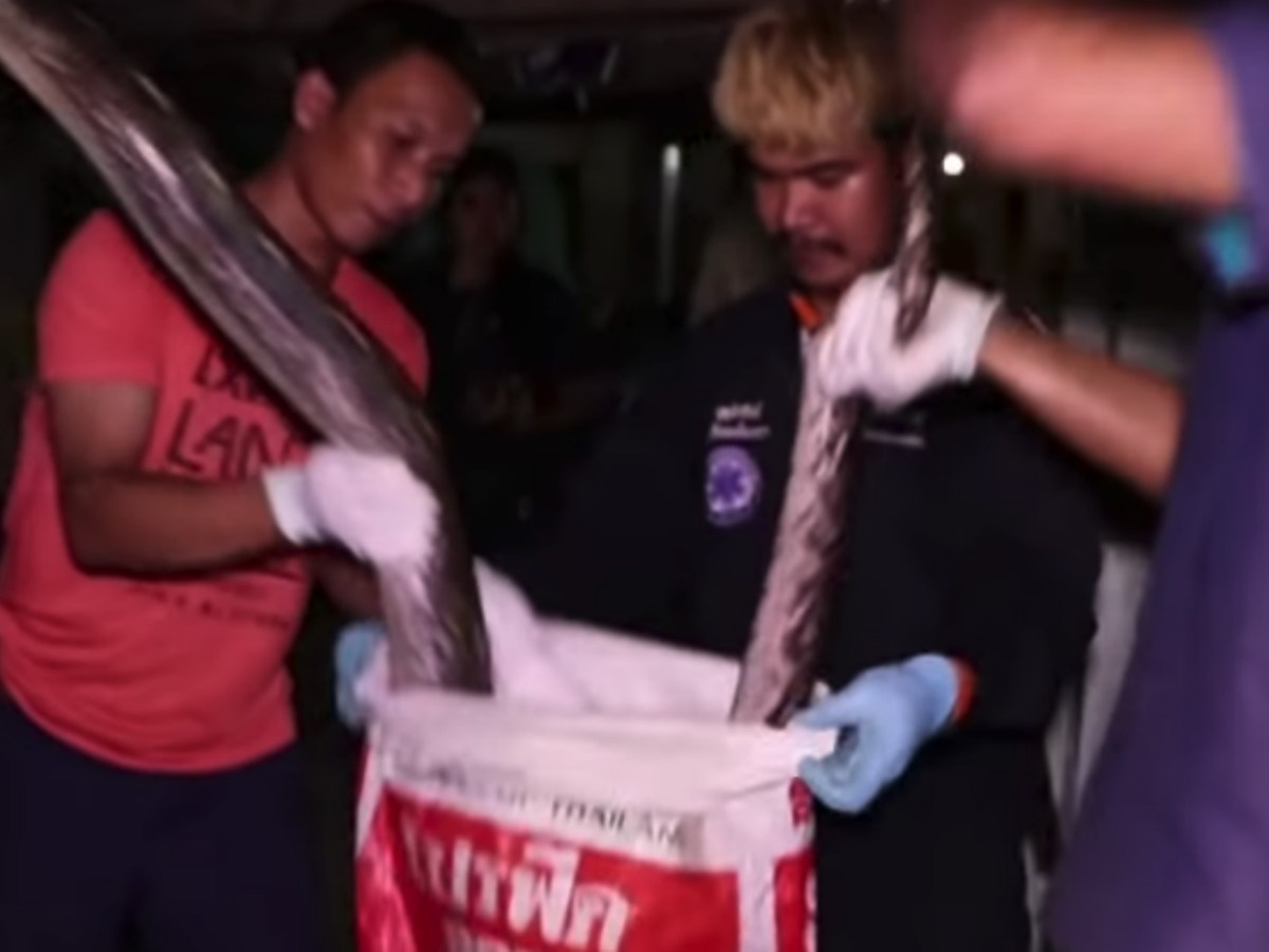 Rescue workers put the snake in a large bag before taking it away. Photo: YouTube screen grab.