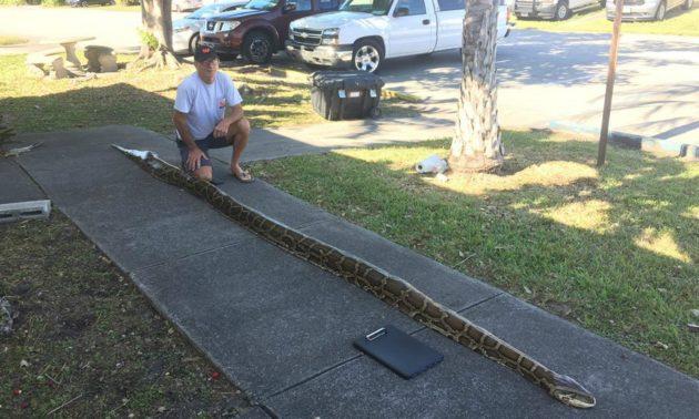 捕蛇專家約翰·夏蒙特與5.5米長特大蠎蛇 相片:佛羅里達州魚類及野生動物保育委員會