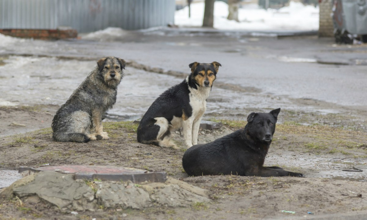 Dogs are seen as a meal in some parts of Asia. Photo: iStock