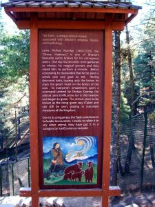 What To Do In Bhutan - See Bhutan National Animal - Takin, folklore about how Takin was created