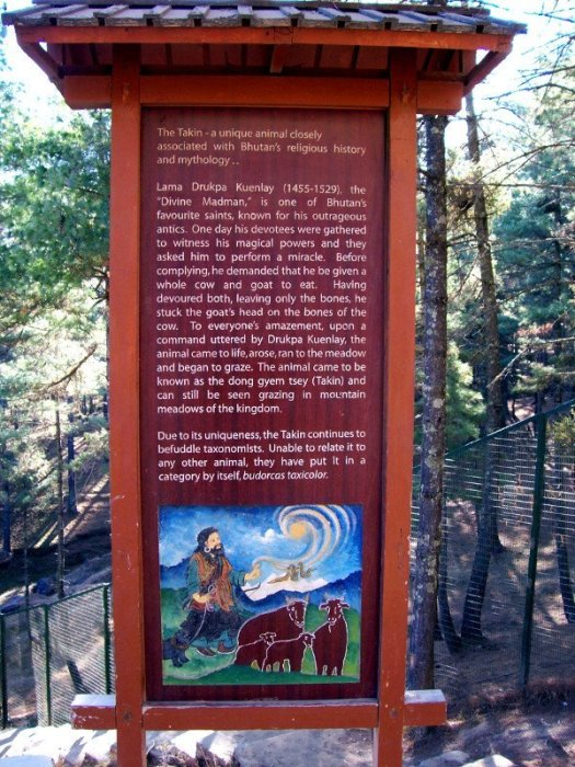 Best Places To Visit In Thimphu Bhutan - Takin Preserve - See Takin, Bhutan's National Animal - Folklore about how Takin was created