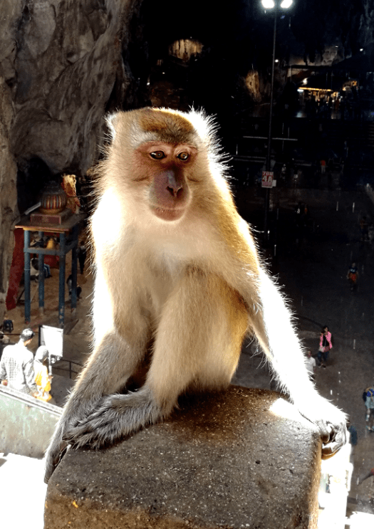 Beware the Monkey at one of the Things To See In Kuala Lumpur - Batu Caves. They look adorable but can turn fierce.