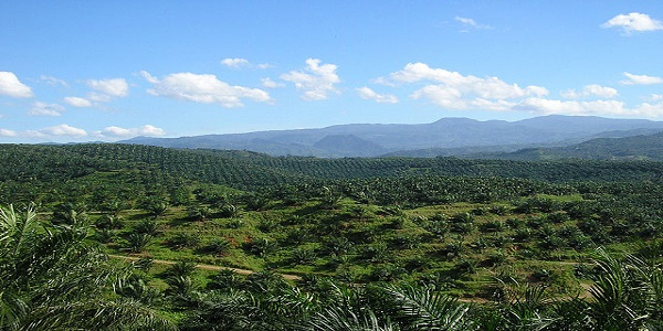 INDONESIA-PALM OIL FREE LABELS A HINDRANCE TO SUSTAINABLE DEVELOPMENT