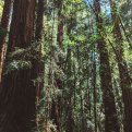Hendy Woods State Park - Northern California Hiking Trails