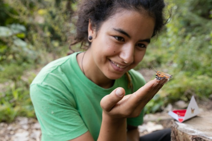 Under Jacques-Cartier Bridge, in Montreal, Le jardin Biodiversité et pollinisateurs welcomes kids for differents types of activities related to nature and gardening. Cynthia Grégoire is an horticulturist for Sentier Urbain, the organisation that manage this garden. On Wednesday, Sept., 16, 2015 she tried to release a butterfly after a butterfly flight happening. (Marie-Pierre Savard / JOUR523)
