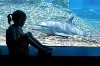 reichlich Ausflugsziele - S.E.A. Aquarium, Sentosa