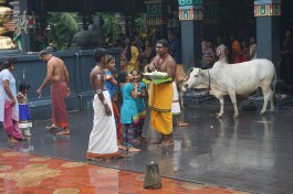 Hindutempel bei Taiping, in dem wir übernachten