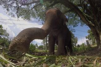 Rüssel mit Elefant