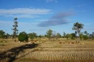 derzeit (Dezember) trockene Landschaft in Südlaos
