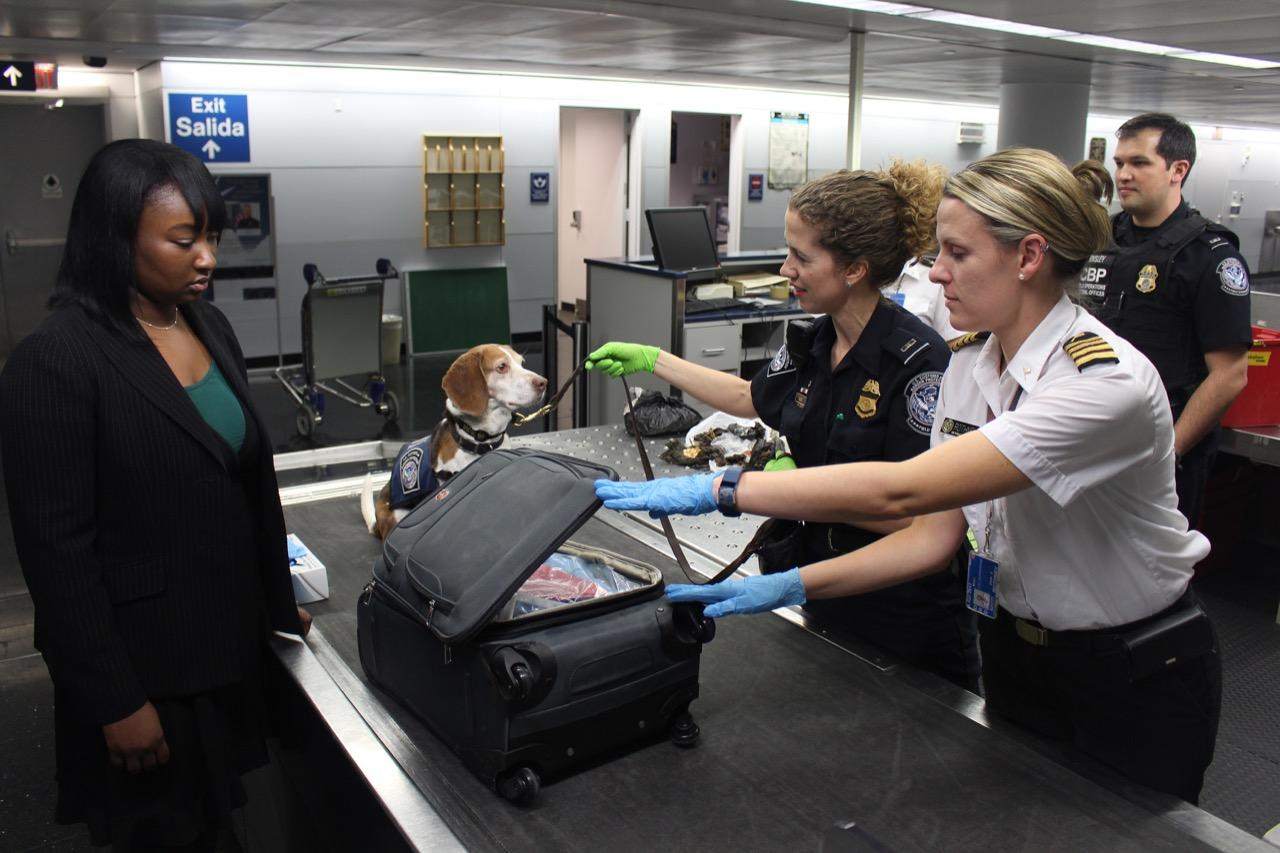 Viaja con tu mascota en avión