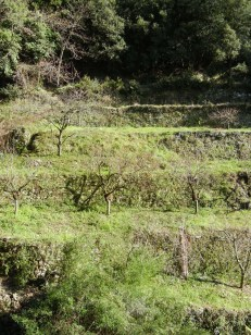 All the agricultural land is terraced to prevent runoff.