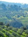 tuscan 6