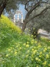 delphi 41 athena