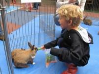 petting zoo 4