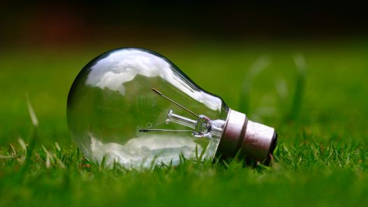 Light bulb laying on grass