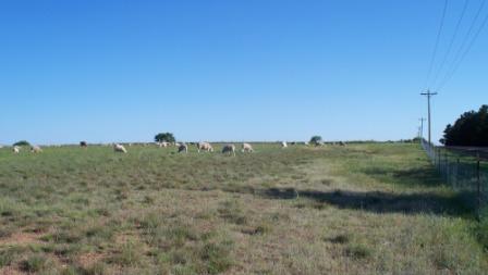 SheepOnPasture_03_compressed