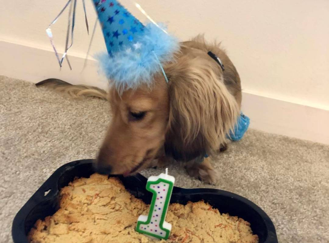 Cooper Turns One!