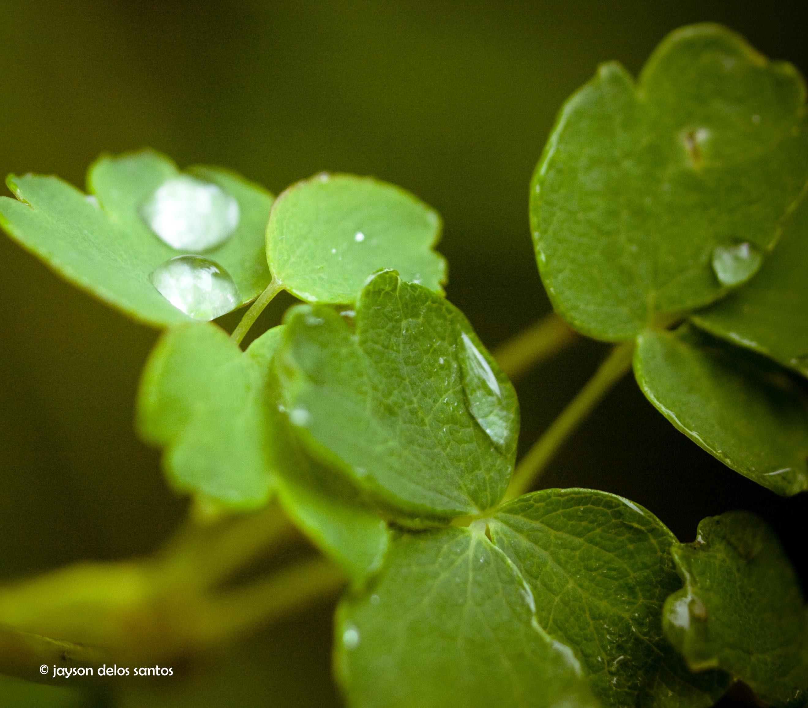 droplet01-3