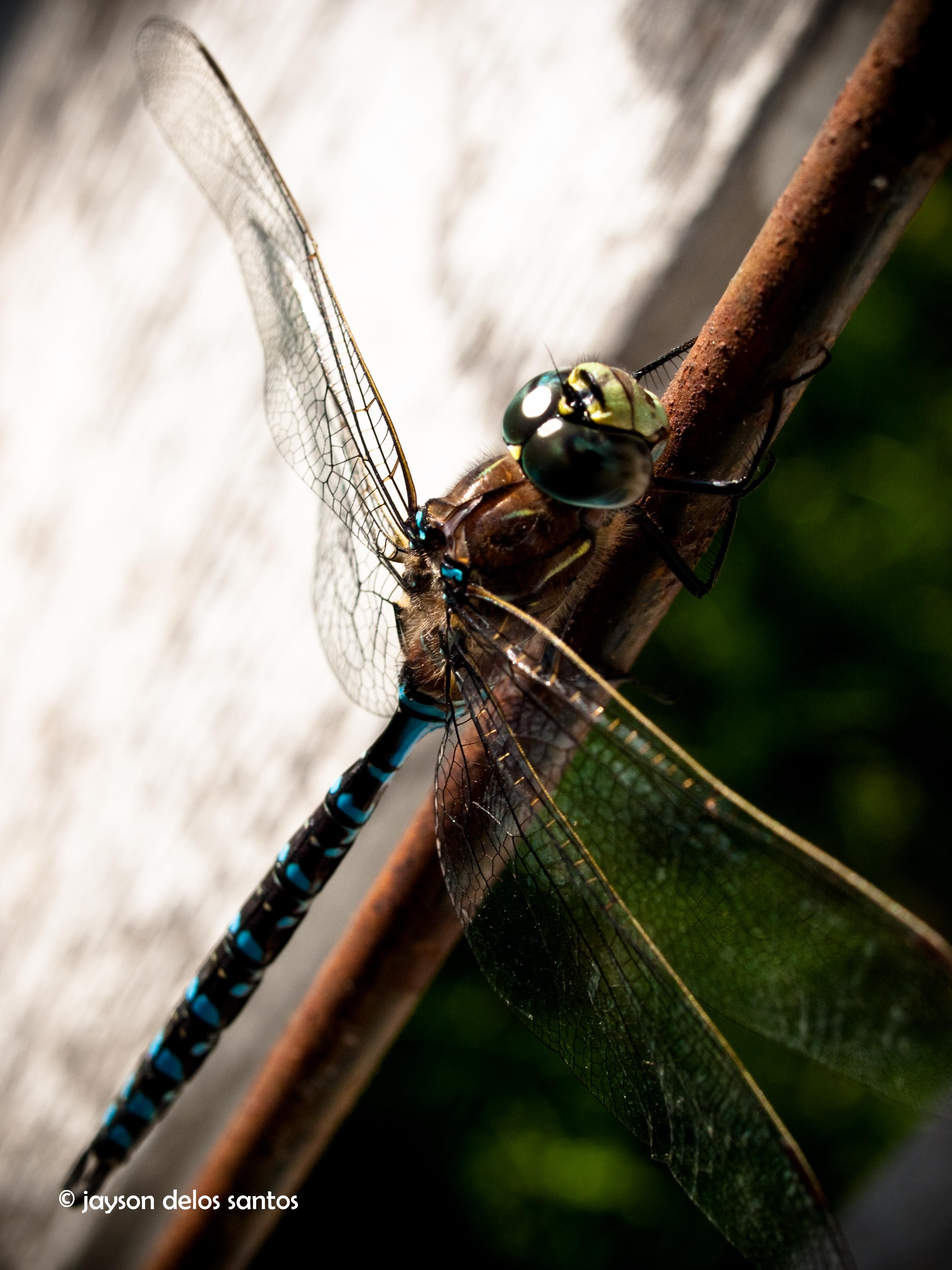 dragonfly03