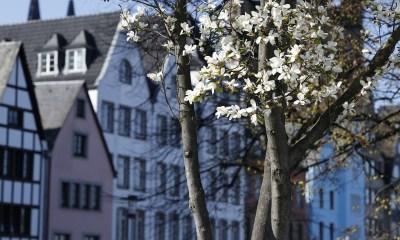 Zašto je proleće najbolje za kupovinu nekretnine
