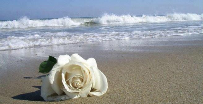 cropped-mar-e-rosas1.jpeg