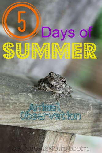 5 Days of Summer- Learning 'animal observation'