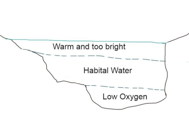 Thermocline, understanding this is part of the steps to the bass fishing guide .