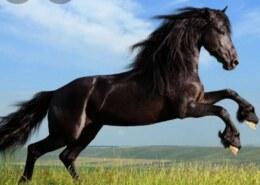 السلام عليكم منين اجت فكرة قياس قوة االمحرك بالاحصنة