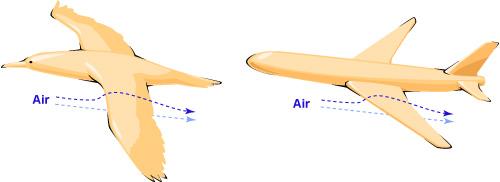 bird-plane wing lift
