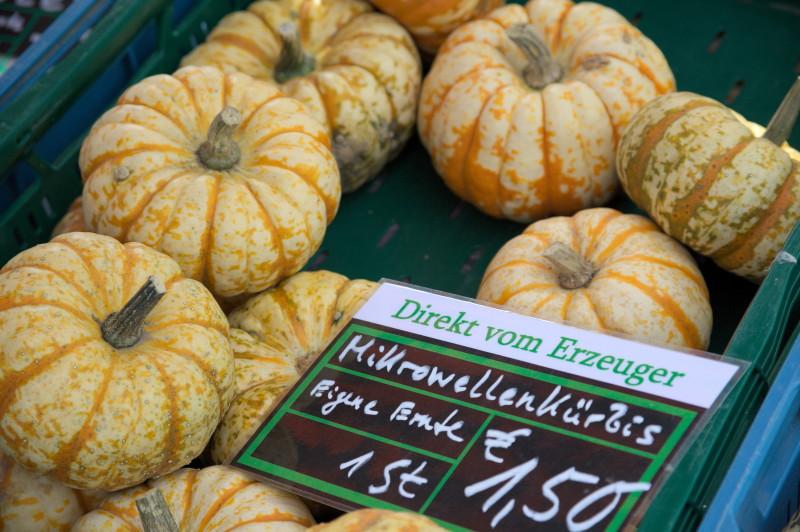 A new variety? Microwave pumpkin