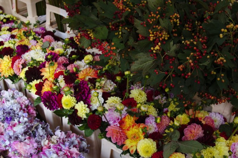 Flowers for all colors
