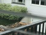 mallard in basket on balcony