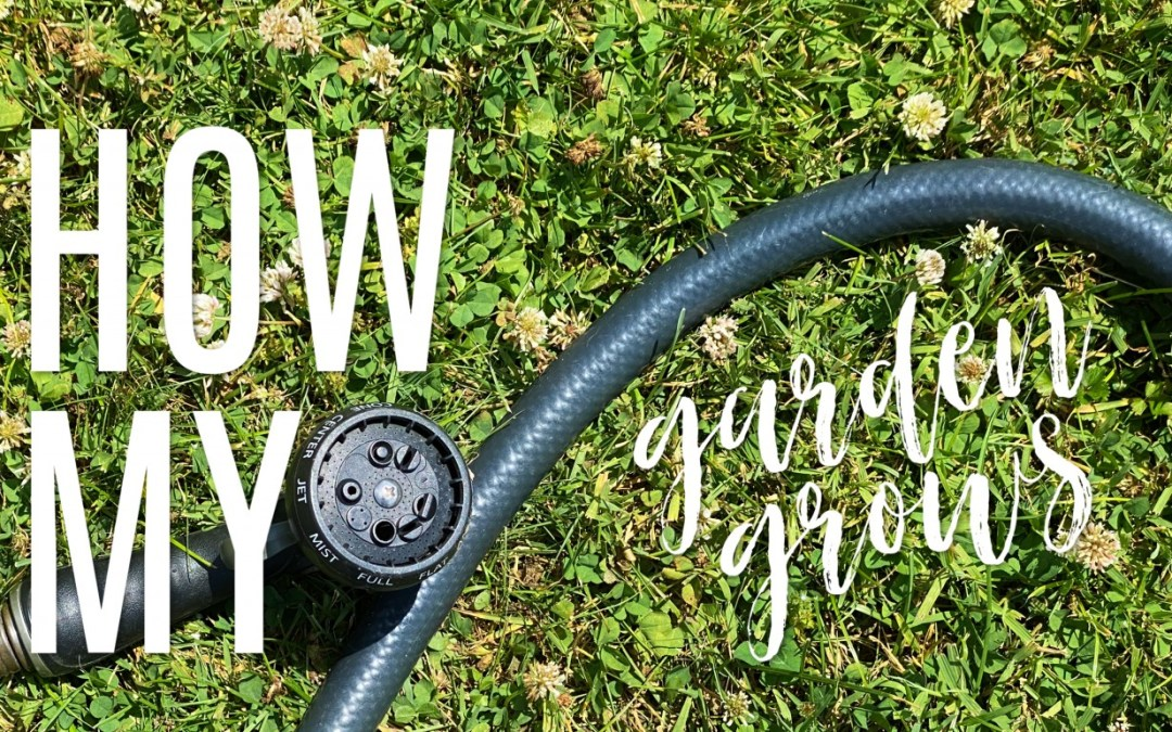Garden | June 2020