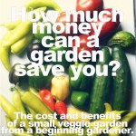 How Much Money Can a Garden Save You? The Cost and Benefits of a Small Veggie Garden from a Beginning Gardener