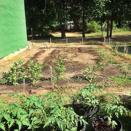 Mature Garden