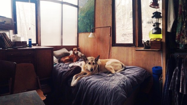 Dogs in a tiny house