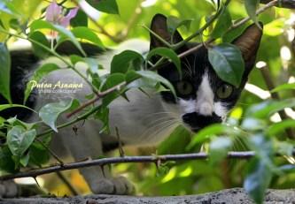 the-cat