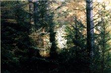 'treelight', Alex Hackett