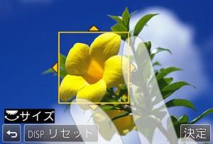image41