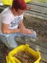 Limpieza de semilla seca