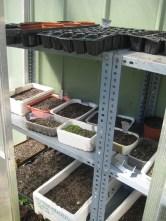 Semilleros recién sembrados