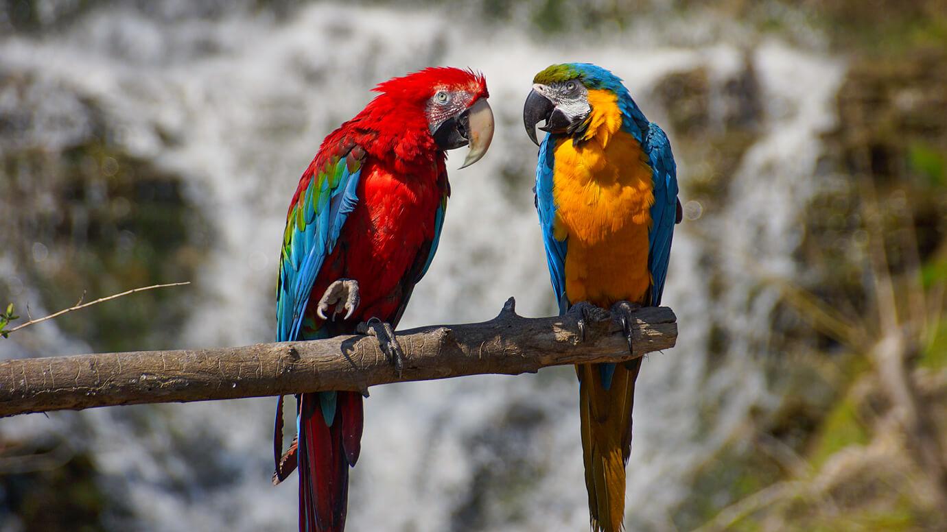 Mundomar, dierentuinm, Benidorm, Costa Blanca